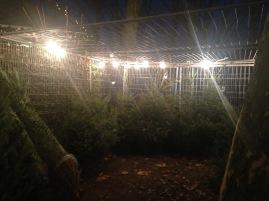 Leeuwarden - alberi di Natale in gabbia per cattivo comportamento